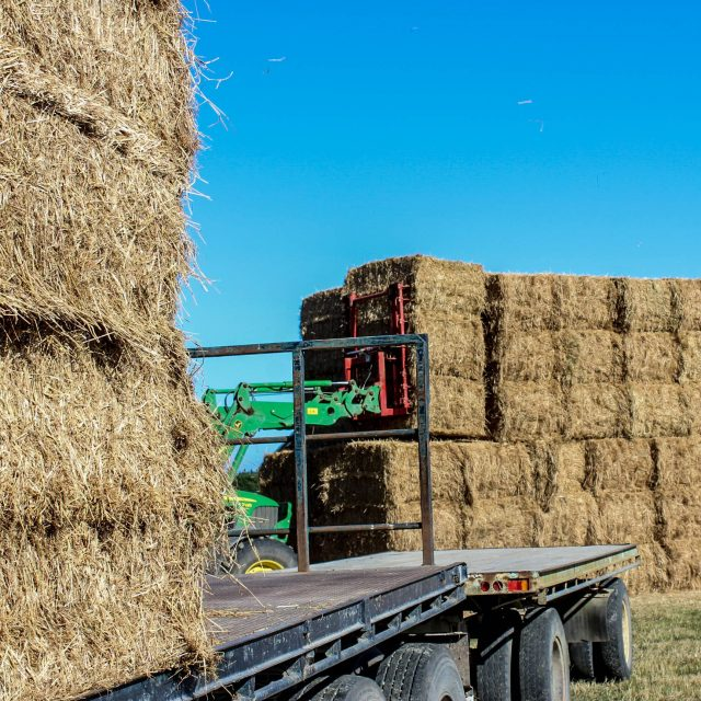Loading Shogun Ryegrass Straw
