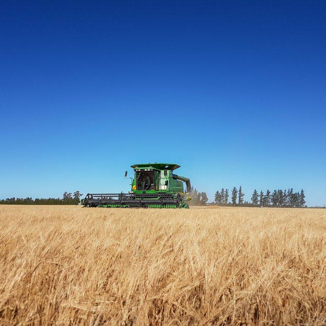 Harvesting Fortitude Barley