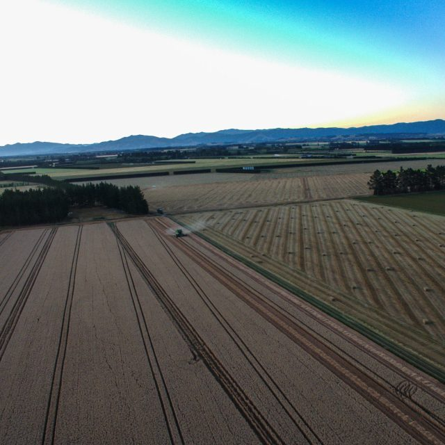 John Deere 9550 combine, harvesting Hanson wheat