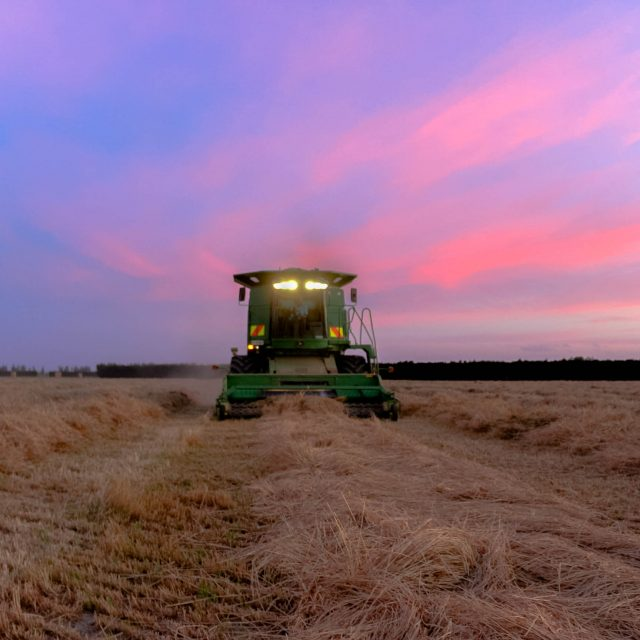 Harvesting Italian Rye-grass 2016