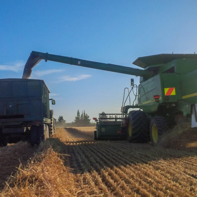Harvesting Dryland crop of Hanson Wheat
