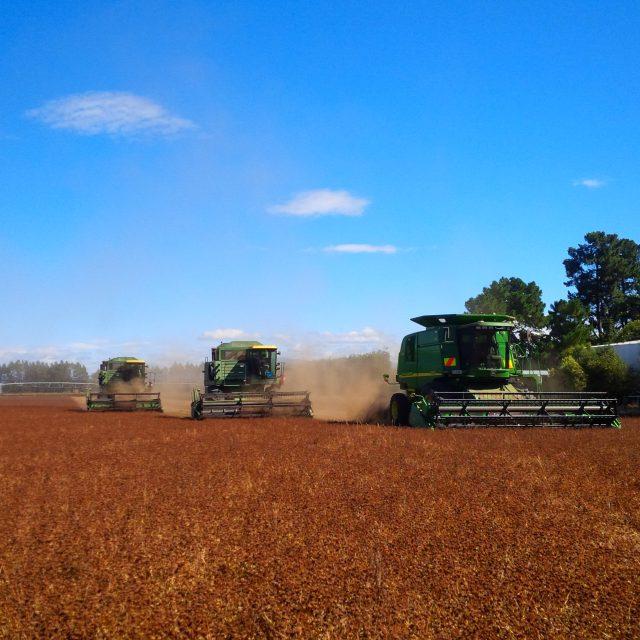 All 3 Combines, John Deere 9550, 7720 and 6620 harvesting white clover