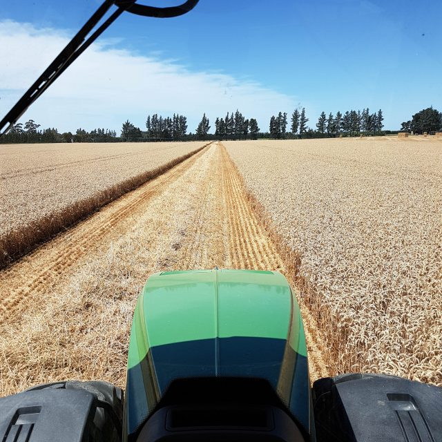 Looking out the front window of 7r onto a crop of wheat