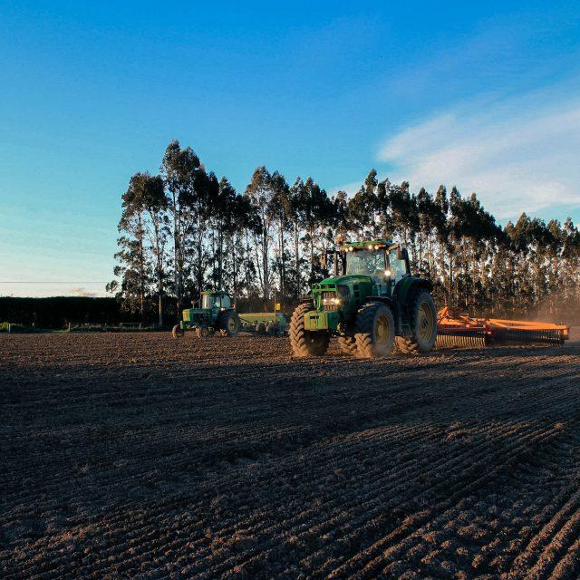 Planting Marofat Peas