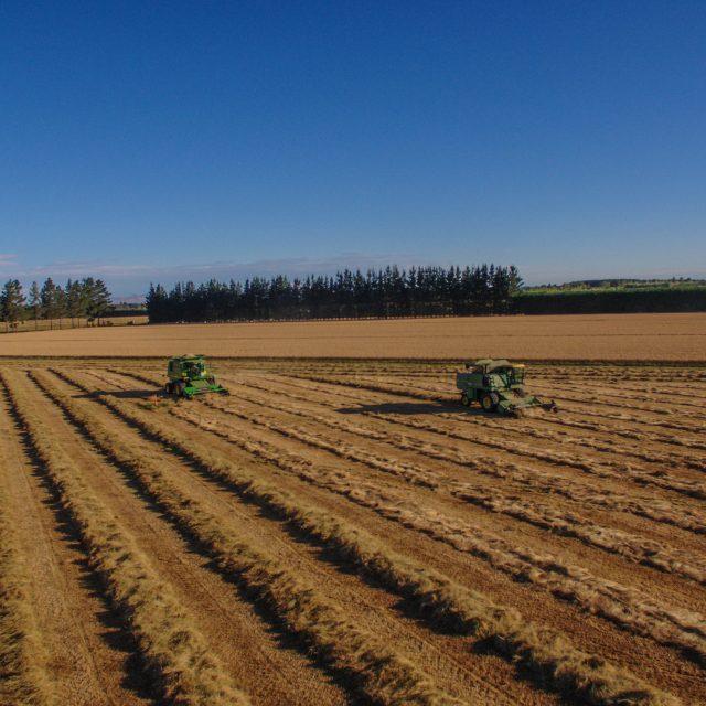 Harvesting Rohan Ryegrass