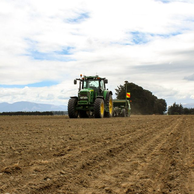 Sowing grasseed crop early March